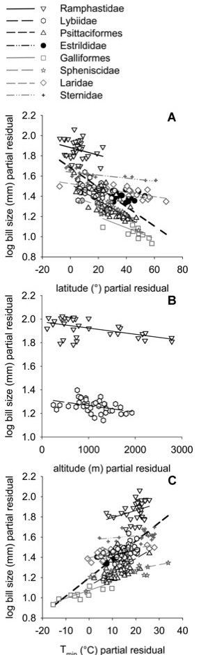 "Figure                 2: Relationship (partial residual plots; see ""Methods"")                 between bill length and geographical/climatic variables                 among the birds used in the analyses. Best-fit lines are                 indicated for each group (see table 1 for significance                 values). Thick dashed line represents the best fit for                 all species combined; other lines are indicated in the                 legend. A, Midpoint latitude; B, midpoint altitude                 (Ramphastidae and Lybiidae only); C, minimum                 temperature. Residuals for A and C calculated across all                 214 species; residuals for B calculated for each group                 separately."