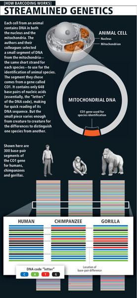 sequences de 3 primates pour CO1