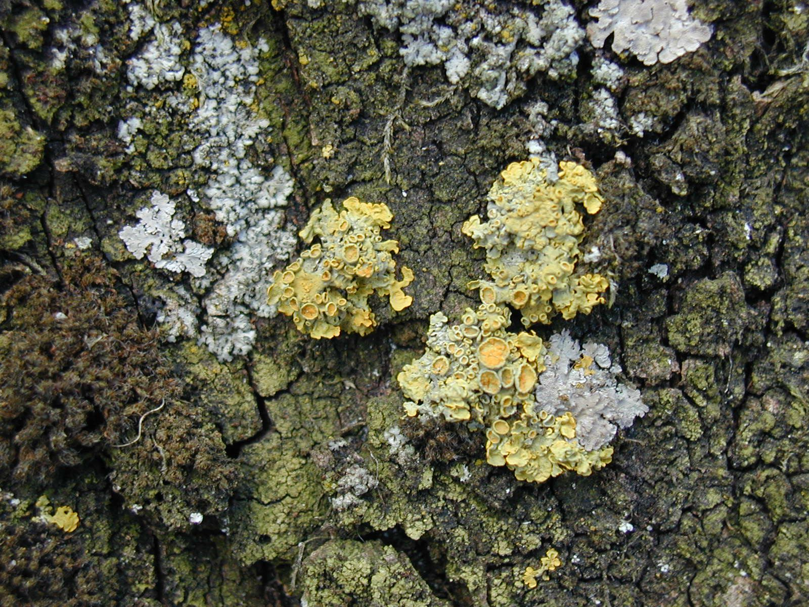 lichen and green algae relationship tips