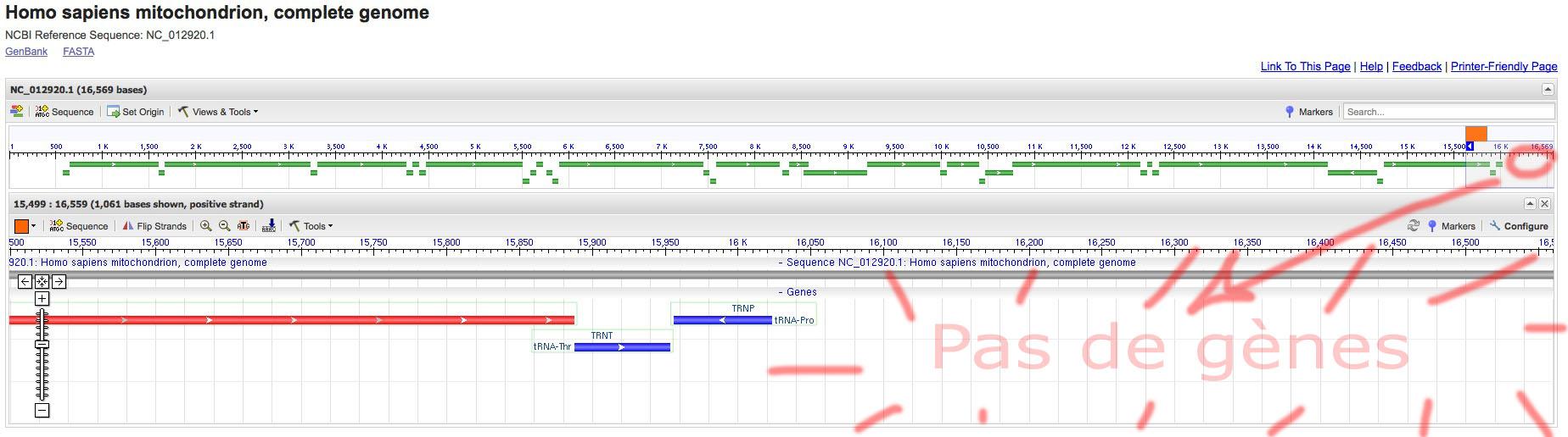 http://tecfa.unige.ch/perso/lombardf/projets/experimental/mt-seq-29-III-11/mt-sequence-non-codante.jpg